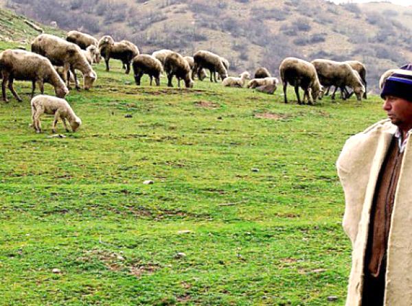 İlçe Tarım'dan Çobanlık Kursu