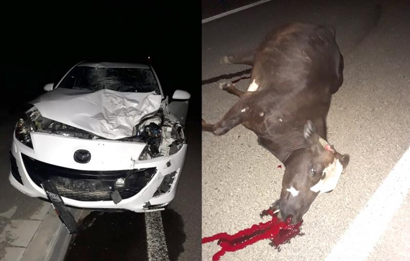 Otomobil, Aniden Yola Çıkan İneğe Çarptı