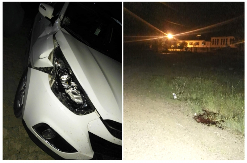 Otomobilin Çarptığı Korkmaz, Hayatını Kaybetti