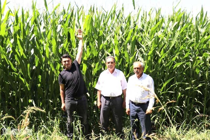 Silajlık Mısırın Hasadı Çiftçinin Yüzünü Güldürdü