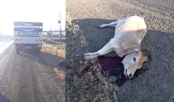 Solhan'da Maddi Hasarlı Trafik Kazası