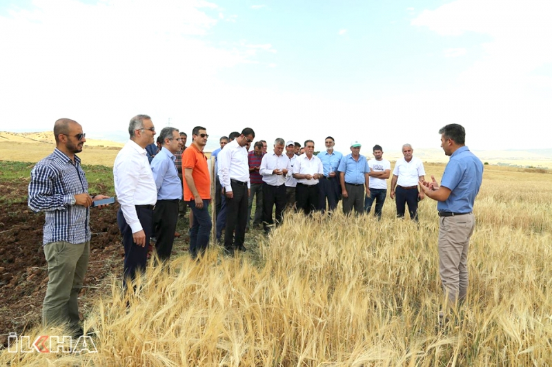 Yerel Buğday Tohum Türleri Çiftçilere Tanıtıldı