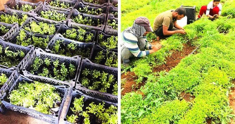 Yerli Tohumdan Üretilen Sebze Fideleri Satışa Sunuldu
